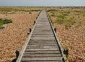 Boardwalk at Dungeness.jpg