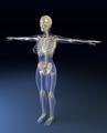 Body-bones2.png