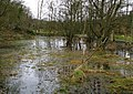 Boggy land near Shaws Bridge, Belfast - geograph.org.uk - 701245.jpg