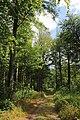 Bois d'Acren 01.jpg