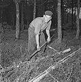 Bosbewerking, arbeiders, bomen, gereedschappen, Bestanddeelnr 251-9125.jpg