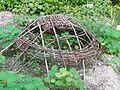Botanični vrt (3990917656).jpg