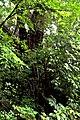 Botanic garden limbe102.jpg