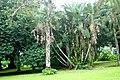 Botanic garden limbe147.jpg