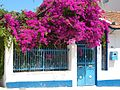 Bougainvillea in Poros.jpg