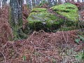 Boulder in the woods - geograph.org.uk - 138329.jpg
