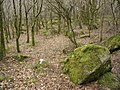 Boulders, near Lustleigh Cleave - geograph.org.uk - 1195120.jpg