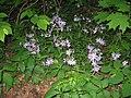 Bowman's Hill Wildflower Preserve - IMG 8302.JPG