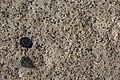 Brandberg Hornblende-Granit.JPG