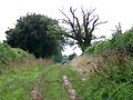 Bridleway near Cowgrove - geograph.org.uk - 1471110.jpg