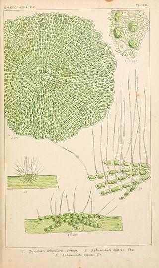 British fresh-water algae, exclusive of Desmidieae and Diatomaceae (1882-1884) (20409523652).jpg