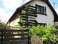 Brník (Oleška), strom na stěně.jpg