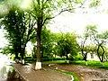 Brody, Lviv Oblast, Ukraine - panoramio (255).jpg