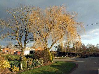 Broomhall Green village in the United Kingdom