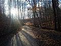 Bukowy las okolice Borkowa - panoramio.jpg