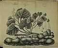 Bulletin de la Société Impériale des Naturalistes de Moscou (1851) (20437095255).jpg
