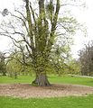 Burghley House Park landscape april 2017 29.jpg