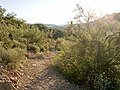 Butcher Jones Trail - Mt. Pinter Loop Trail, Saguaro Lake - panoramio (63).jpg