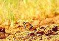 Butterfly on sand.jpg