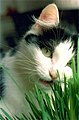 CAT&GRASSphotobyNancyWong.jpg