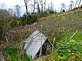 Cabane dans les vignes - panoramio.jpg