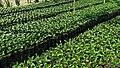 Café Plantage in Armenia 40.jpg
