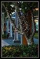 Cairns tree lighting-1 (8259502440).jpg