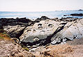California-Point Lobos-Rocks.jpg