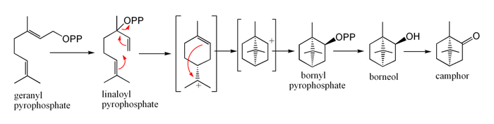 Biosynthesis of camphor from geranyl pyrophosphate