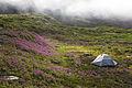 Camping in the Fog (21459401796).jpg