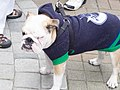 Canucks-game5-2012-rogers-arena-20120422-20 (6976899380).jpg