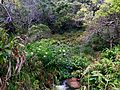 Canyon Trail Kauai.jpg