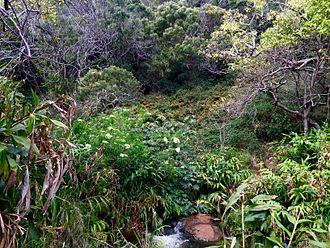 Koke'e State Park - Image: Canyon Trail Kauai