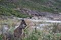 Cape Le Grand National Park, Western Australia 52.jpg