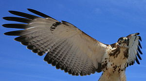 Introduction to evolution - The bird and the bat wing are examples of convergent evolution.