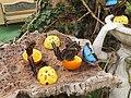 Casa delle farfalle - Morpho peleides 04.jpg