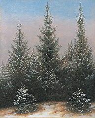 Taillis de l'épicéa au neige
