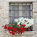 Castellaro Lagusello (Mozambano), flowers fonds.jpg