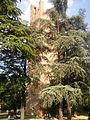 Castello, Torre Donà nel verde (Rovigo).jpg