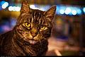 Cat (5542263437).jpg