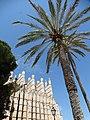 Cathedral - Palma de Mallorca - Mallorca - Spain - 02 (14478555841).jpg