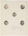 Cebus hippoleucus - gezicht - 1818-1842 - Print - Iconographia Zoologica - Special Collections University of Amsterdam - UBA01 IZ20200029.tif