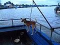 Chó cỏ ở Cần Thơ (chợ nổi) năm 2014 (1a) (3).JPG