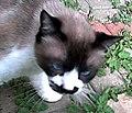 Charlie the cat - closeup.jpg