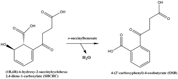 Chemical reaction catalyzed by OSBS.png