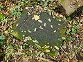 Chenstochov ------- Jewish Cemetery of Czestochowa ------- 179.JPG