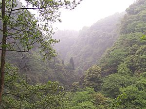Sichuan Basin - Evergreen broadleaf forests on Mount Emei