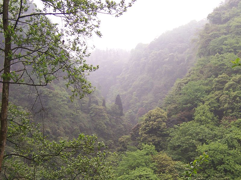 China - Emei Shan 1 - lush misty forest (135959880).jpg