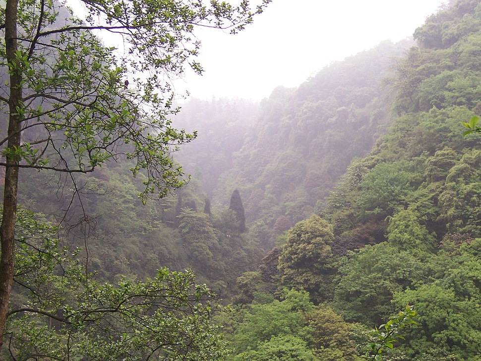China - Emei Shan 1 - lush misty forest (135959880)