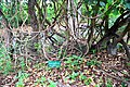 Chinnar Wildlife Sanctuary DSC 5671.jpg